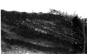貝層の断面図