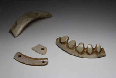 北海道には生息しないイノシシの牙で作られたアクセサリー