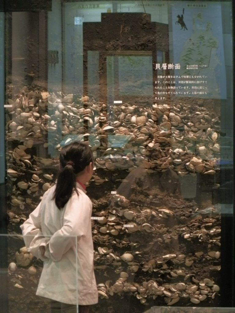 貝層の展示